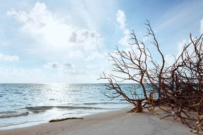 Abandoned Beach at Maldives island Fulhadhoo with white sandy beach and sea. Wild Beach at Maldives island Fulhadhoo with white sandy beach and sea, snags gro stock images