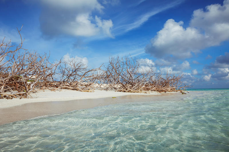 Abandoned Beach at Maldives island Fulhadhoo with white sandy beach and sea. Wild Beach at Maldives island Fulhadhoo with white sandy beach and sea, snags gro stock photos