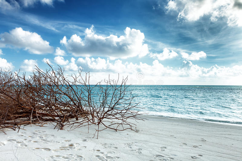 Abandoned Beach at Maldives island Fulhadhoo with white sandy beach and sea. Wild Beach at Maldives island Fulhadhoo with white sandy beach and sea, snags gro stock photo