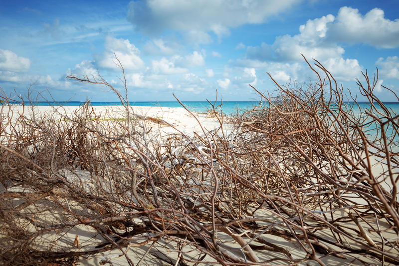 Abandoned Beach at Maldives island Fulhadhoo with white sandy beach and sea. Wild Beach at Maldives island Fulhadhoo with white sandy beach and sea, snags gro royalty free stock image