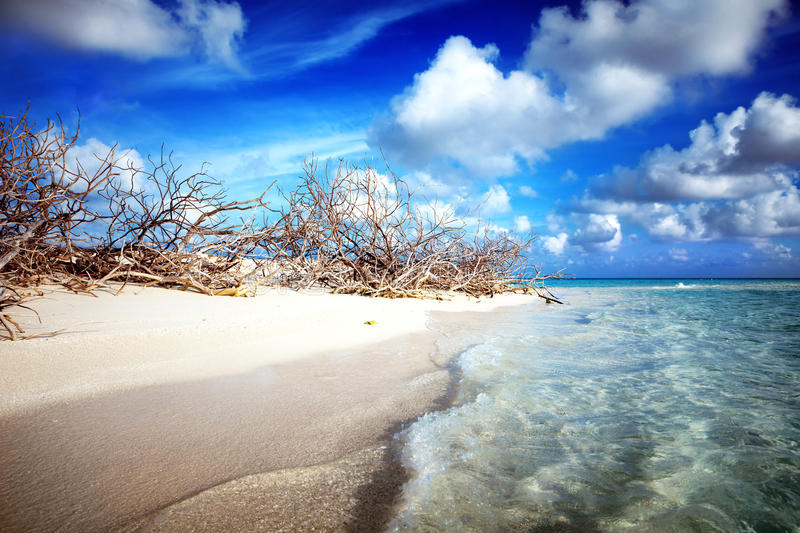 Abandoned Beach at Maldives island Fulhadhoo with white sandy beach and sea. Wild Beach at Maldives island Fulhadhoo with white sandy beach and sea, snags gro royalty free stock images