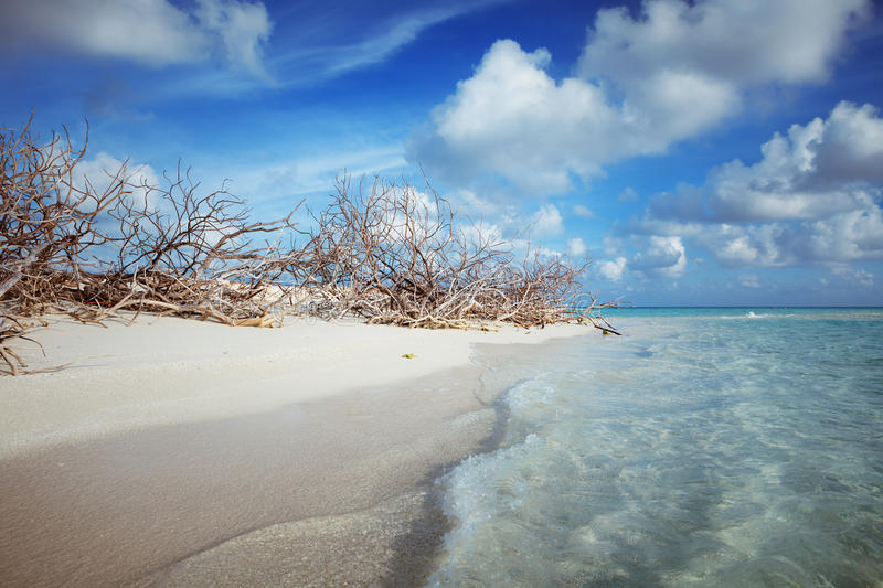 Abandoned Beach at Maldives island Fulhadhoo with white sandy beach and sea. Wild Beach at Maldives island Fulhadhoo with white sandy beach and sea, snags gro royalty free stock photography