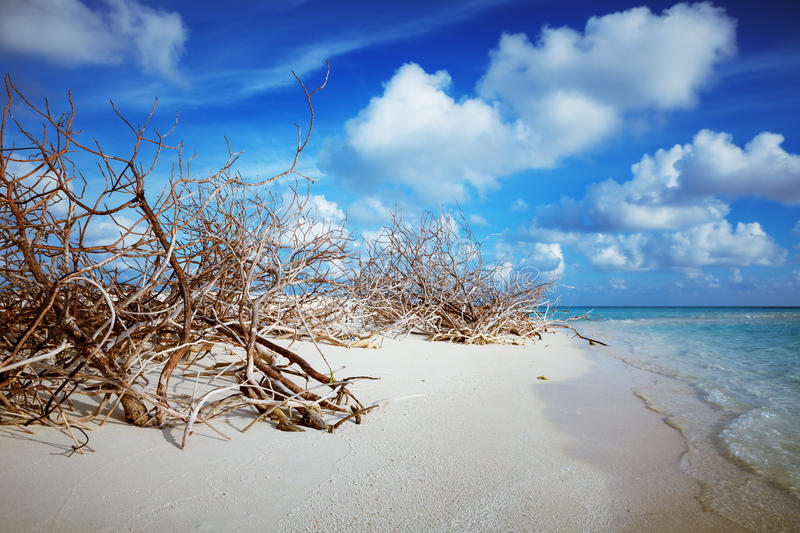 Abandoned Beach at Maldives island Fulhadhoo with white sandy beach and sea. Wild Beach at Maldives island Fulhadhoo with white sandy beach and sea, snags gro stock photography