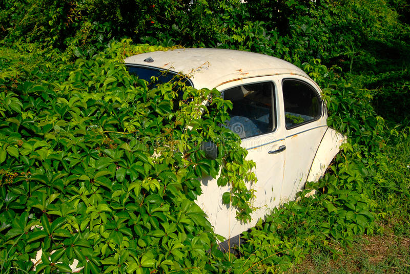 Download Abandoned car stock image. Image of alive, environment - 23149927