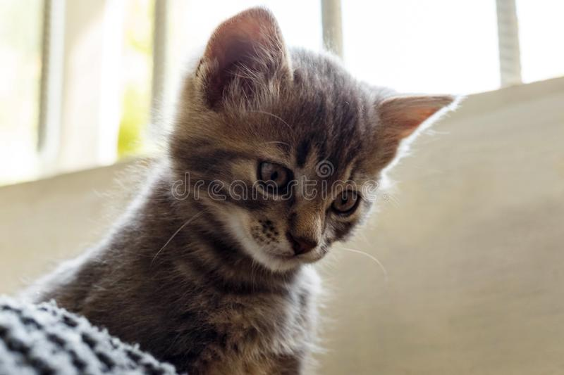 Abandoned cat in cage. Animal shelter. Hope for pet adoption. Fluffy striped kitty stock photos