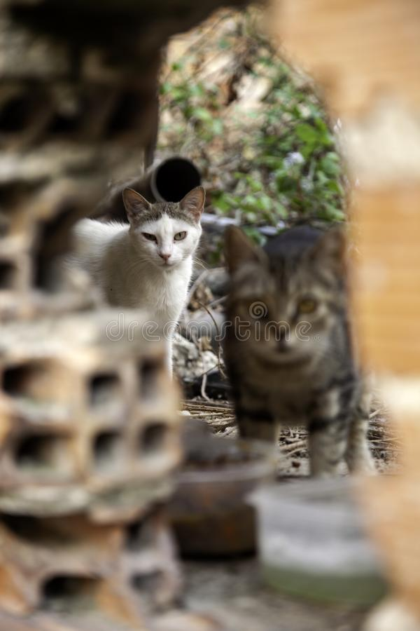 Abandoned cats. Abandoned street cats, adoption of animals, abuse and loneliness, stray, homeless, pet, feral, fur, kitten, cute, white, feline, kitty, young royalty free stock image