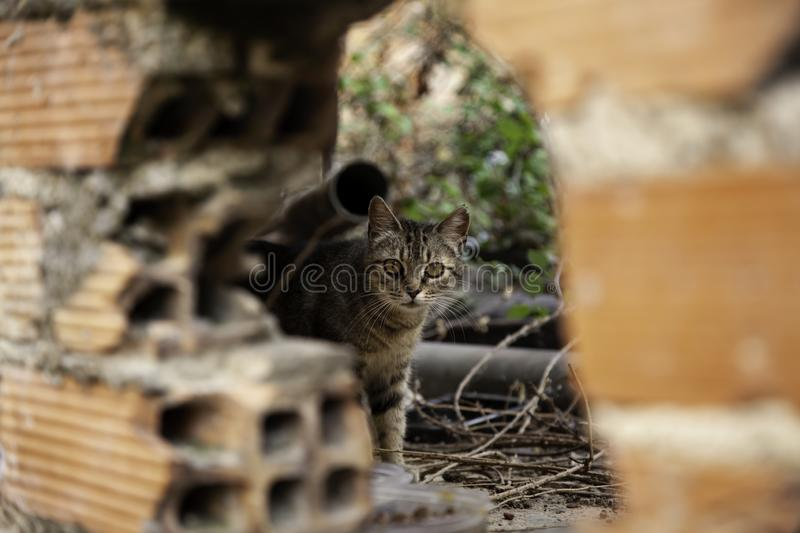 Abandoned cats. Abandoned street cats, adoption of animals, abuse and loneliness, stray, homeless, pet, feral, fur, kitten, cute, white, feline, kitty, young stock image