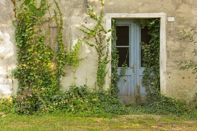 Abandoned Country House Exterior. Facade of an abandoned country house invaded by ivy stock image