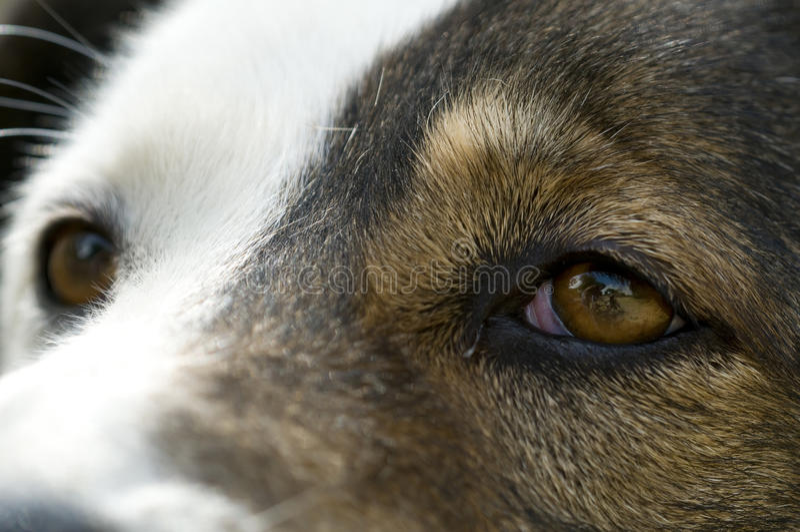 Download Abandoned dog stock photo. Image of stem, sadness, homeless - 16135462