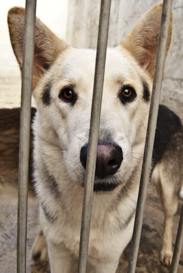 Free Abandoned Dog Stock Image - 20872551