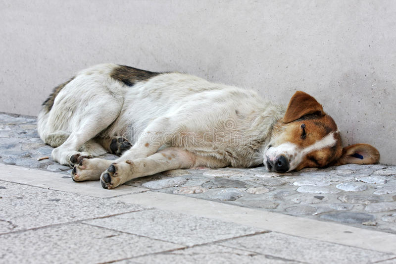 Download Abandoned Dog On The Street Stock Photo - Image: 20981974