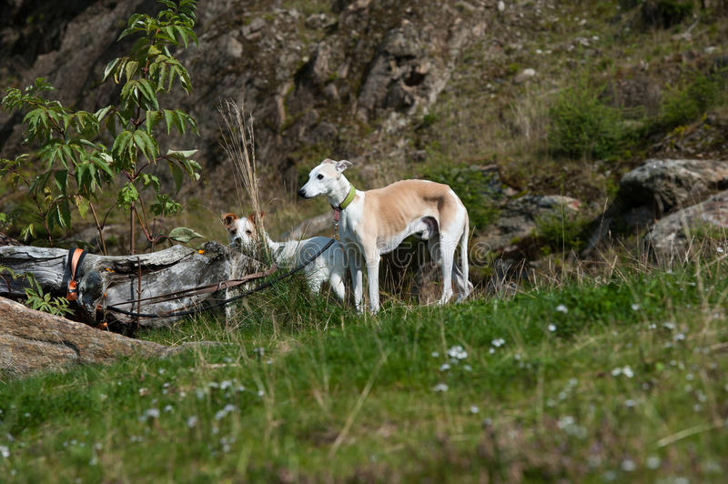 Abandoned dogs royalty free stock photos