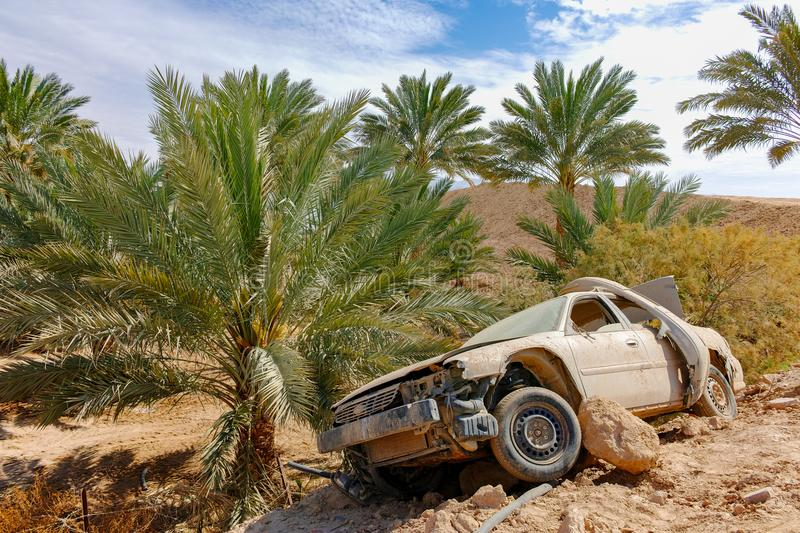 Abandoned dusted wreck of crashed passanger car near date palm t royalty free stock image