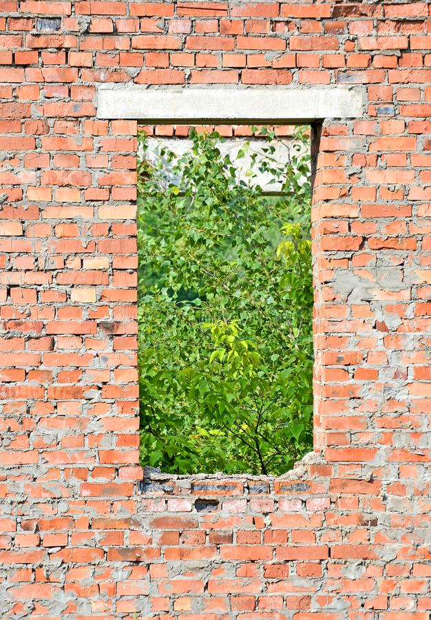 Abandoned empty window with green leafs, chernobyl zone diversity, stock photo