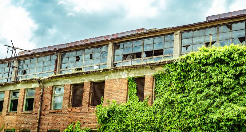 Abandoned factory warehouse with broken windows. And covered in green ivy plant stock image