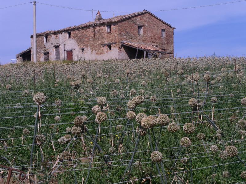 Abandoned farm house in the Marche countryside stock image