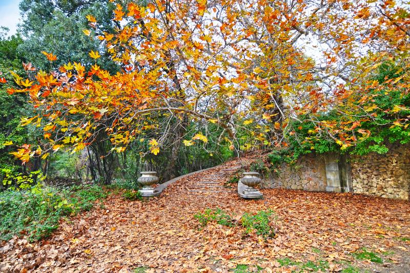 The abandoned garden of Tatoi Palace Greece royalty free stock photography