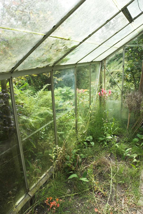 Download Abandoned Greenhouse stock image. Image of weeds, overgrown - 22750905