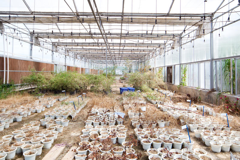 Abandoned Greenhouse. Old abandoned Greenhouse with dry potted plant royalty free stock photos