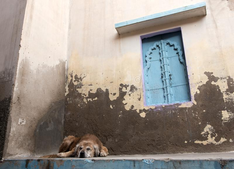 Abandoned homeless dog sleeping outside a house royalty free stock photography