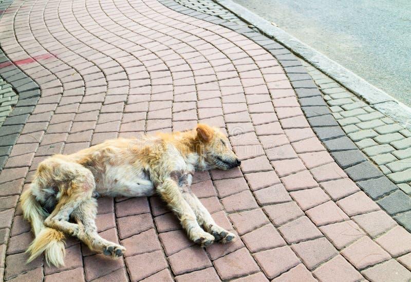 Abandoned homeless dog sleeping on the street stock images