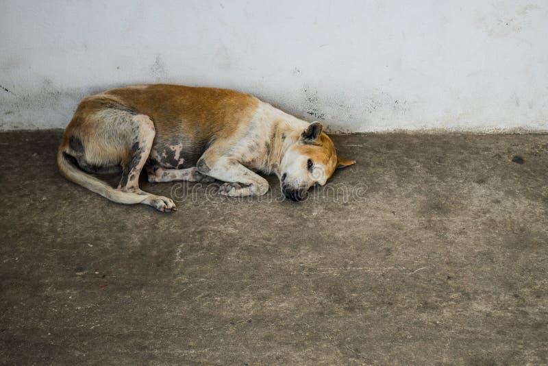 Abandoned homeless stray dog sleeping on the street stock images