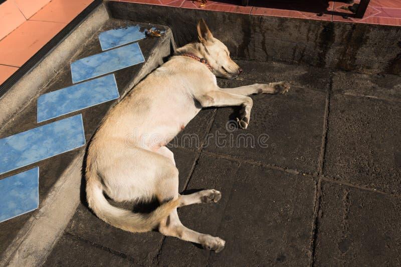 Abandoned homeless stray dog sleeping stock images