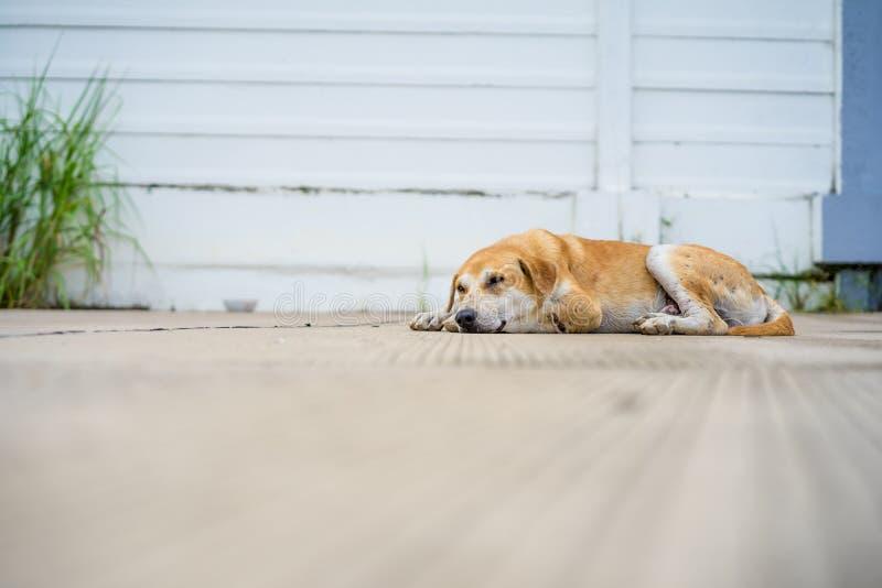 Abandoned homeless stray dog sleeping on the street stock photo