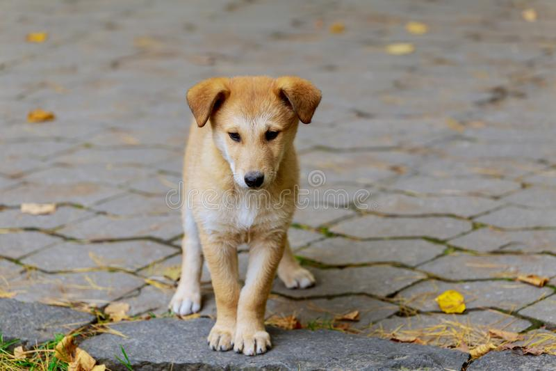 An abandoned, homeless stray dog is standing in the street. Little sad, stock photo