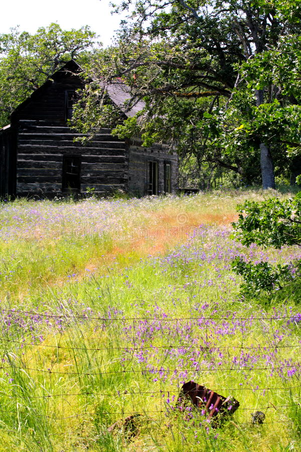 Free Abandoned Homestead Cabin In Field Of Wild Flowers Royalty Free Stock Photography - 19877507