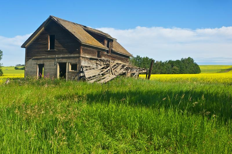 Abandoned house in canola field stock photos
