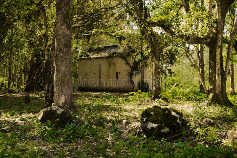 Abandoned house in the florest. A old house abandoned in the florest in the middle of the trees royalty free stock image