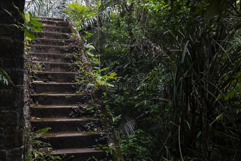 Abandoned house and tropical jungle. Old building in tropics. Rustic stone stairs in bush. The historic site remains stock photography