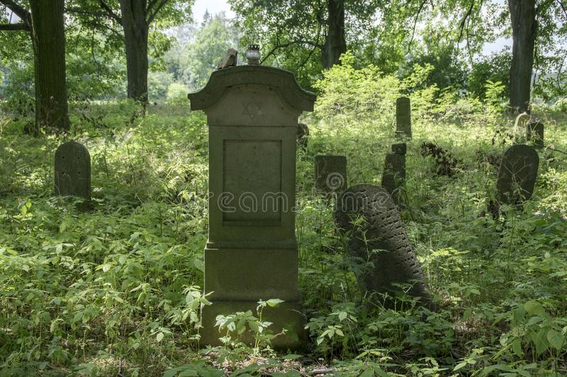 Abandoned Jewish cemetery in the woods near Havlickuv Brod, Czech republic, graves surrounded with weeds royalty free stock photography