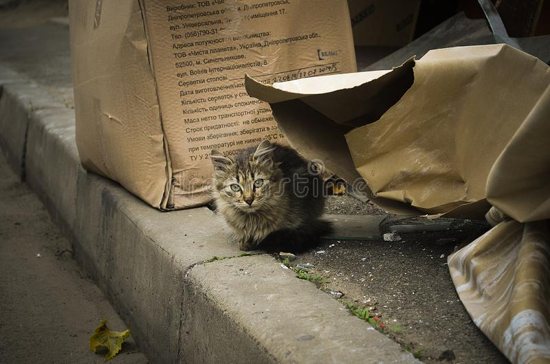 Abandoned kitten in the autumn weather. royalty free stock photos