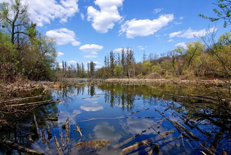 Abandoned lake with fallen rotten trees and reflection of white clouds and blue sky in the water.  stock image