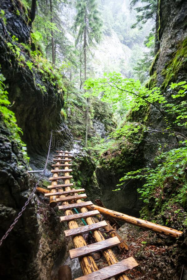 Abandoned old wooden bridge in rain forest stock photos