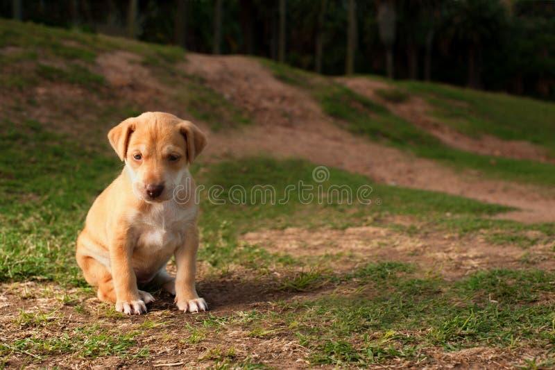 Abandoned puppy stock image