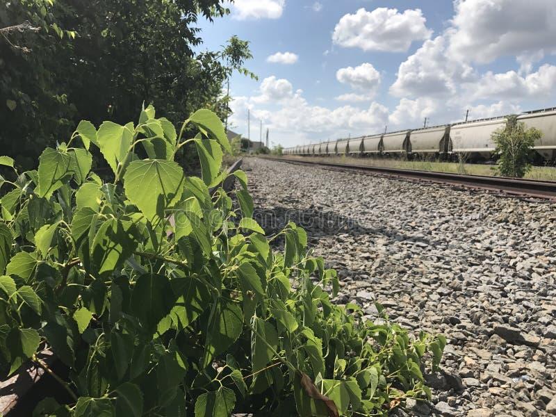 Abandoned Railroad royalty free stock image