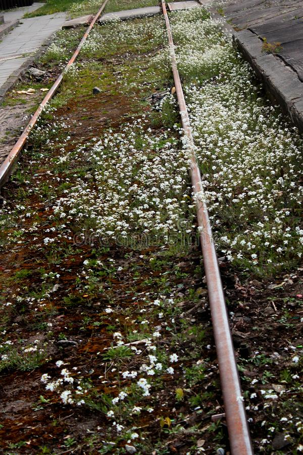 Abandoned railway station. Rusty rails overgrown with wild flowers and weeds.  royalty free stock photo