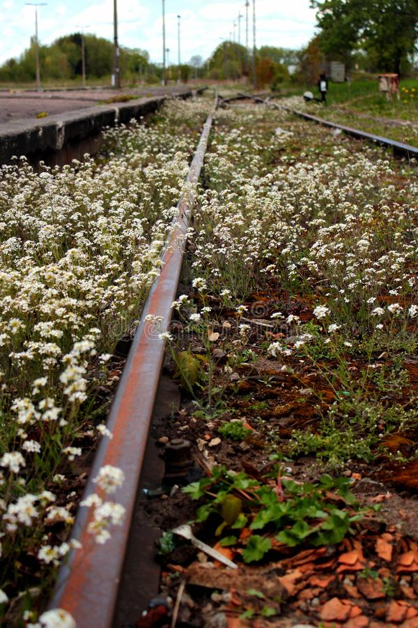 Abandoned railway station. Rusty rails overgrown with wild flowers and weeds.  stock image