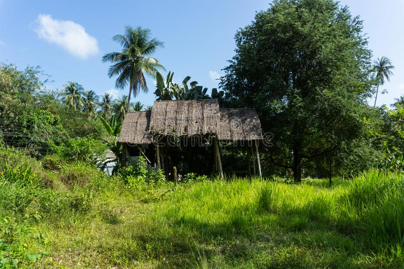 Abandoned ruined hut bungalow on a tropical island among palm trees and grass. In sunny weather in southern Asia on the island royalty free stock photo