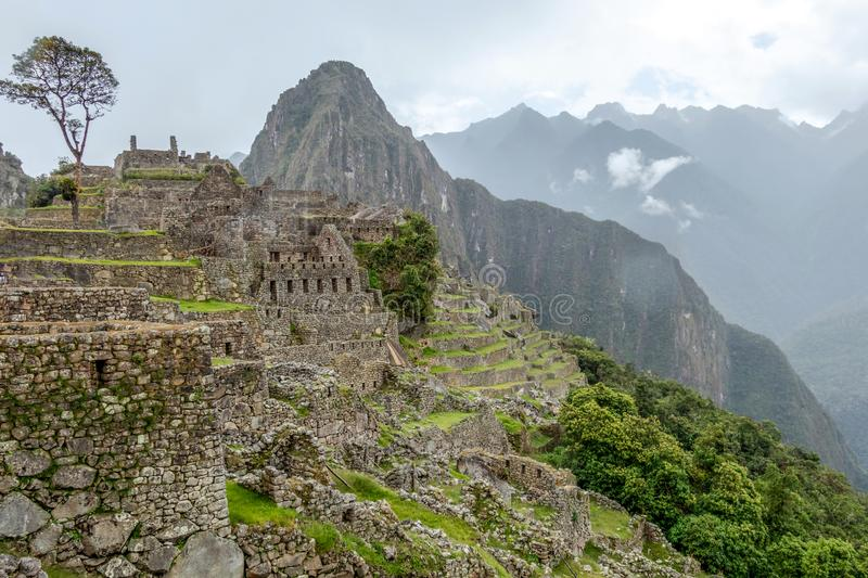 Abandoned ruins of Machu Picchu Incan citadel, the maze of terraces and walls rising out of the thick undergrowth, Peru. Machu Picchu Incan citadel, abandoned stock photos