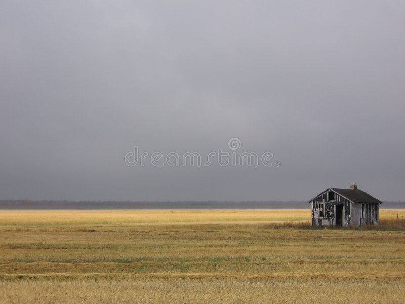 Abandoned Shack in Golden Field stock images