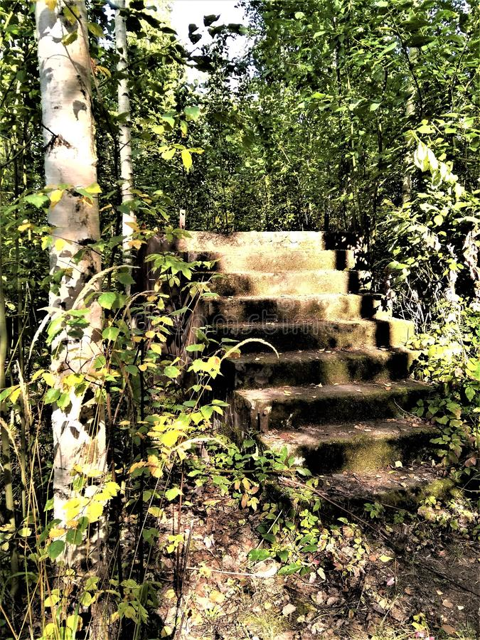 View of  stone stairs in the autumn forest royalty free stock image
