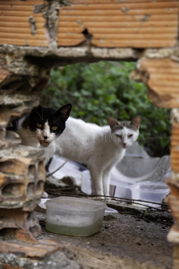 Abandoned cats. Abandoned street cats, adoption of animals, abuse and loneliness, stray, homeless, pet, feral, fur, kitten, cute, white, feline, kitty, young royalty free stock photo