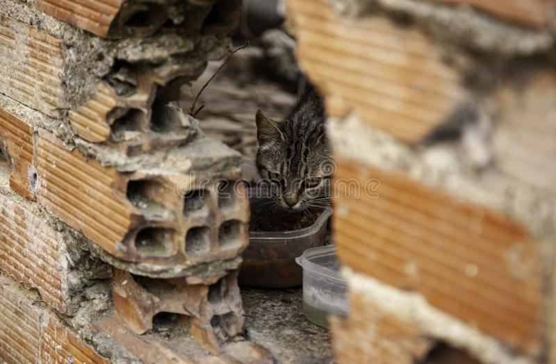 Abandoned cats. Abandoned street cats, adoption of animals, abuse and loneliness, stray, homeless, pet, feral, fur, kitten, cute, white, feline, kitty, young stock photo