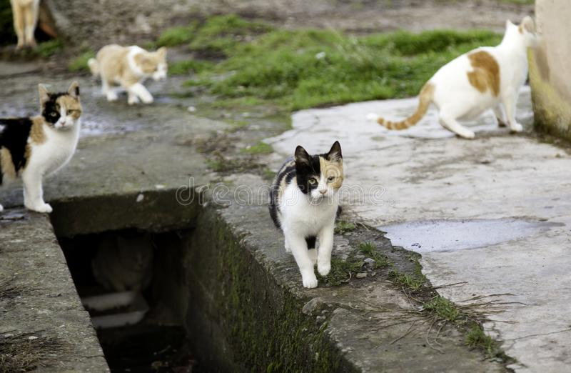 Abandoned street cats. Animal abuse, sadness royalty free stock images