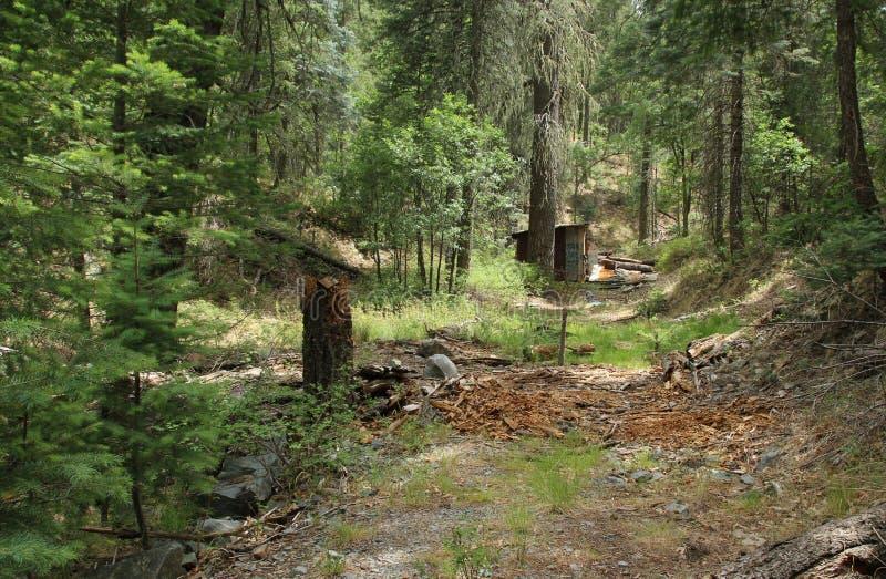 Download Abandoned, Weather-beaten Corrugated Tin Mountain Shack Tuck Deep Into The Mountains Above Prescott, Arizona. Stock Image - Image of shack, trail: 67621115