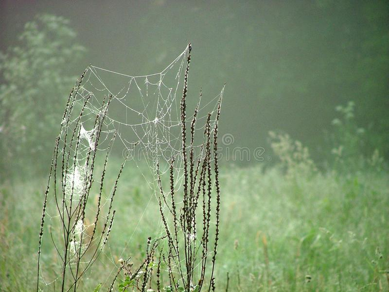 Abandoned Web Free Stock Photo